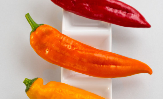 #Peppers #red #orange #yellow #canon #foodphotography