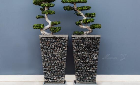 symmetrical trees, canon